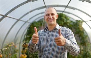 Happy man with tomatos plant in the hothouse